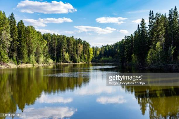 spring on the shore of the taiga lake - sergei stock pictures, royalty-free photos & images