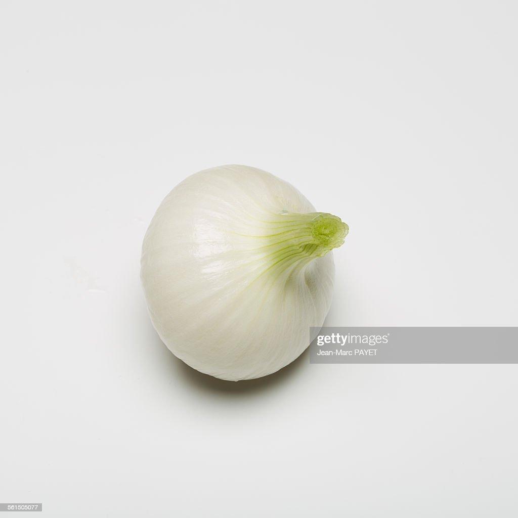 Spring onion isolated on white background : Photo
