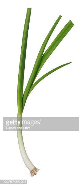 Spring onion (or scallion)