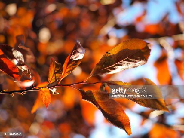 spring or autumn - {{asset.href}} stock pictures, royalty-free photos & images
