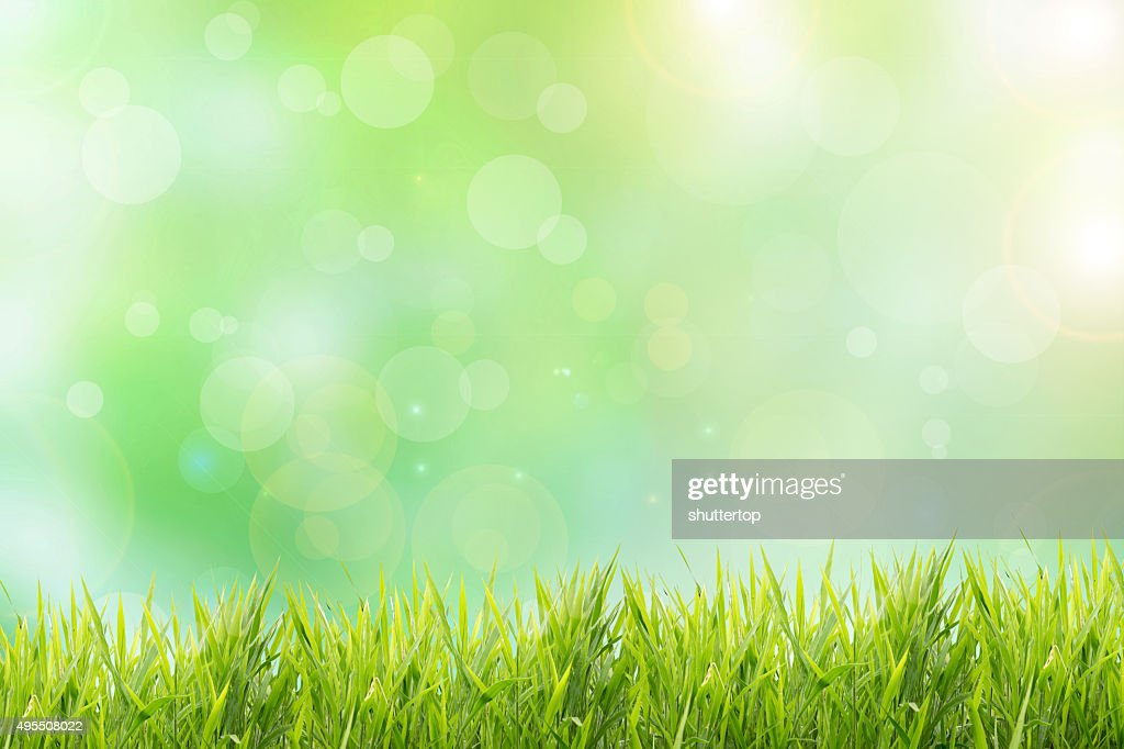 grassy field background. Spring Or Summer Abstract Nature Background With Grass Field Grassy