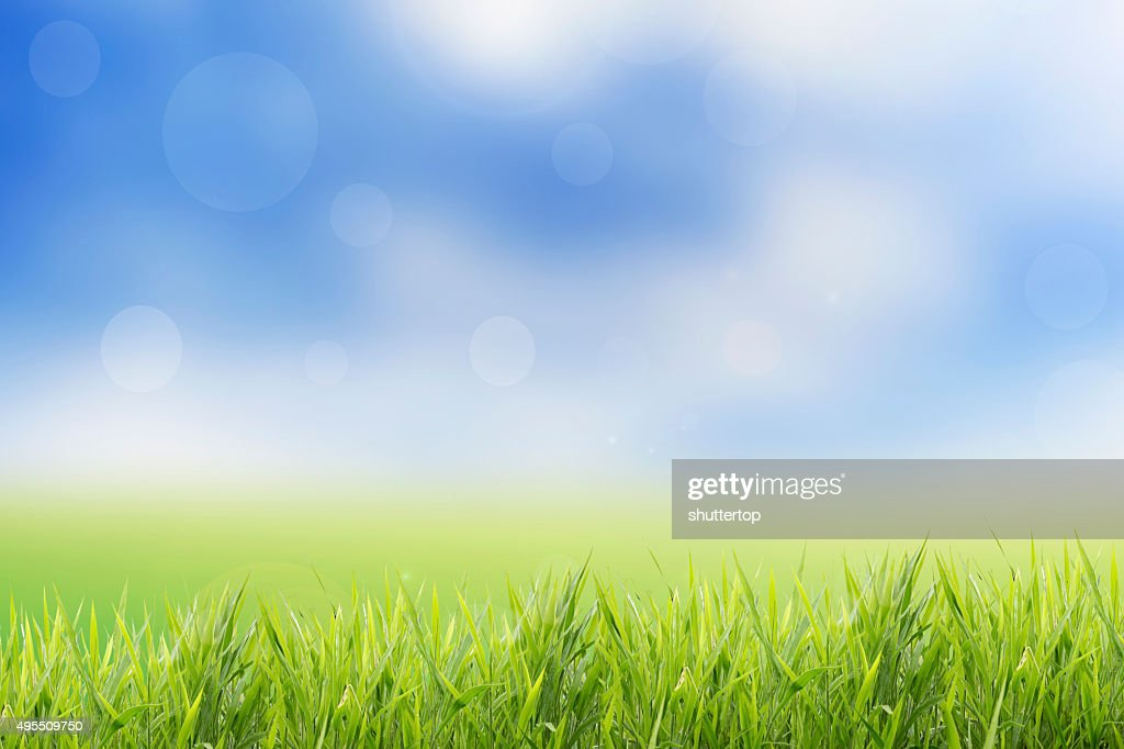 grass field background. Spring Or Summer Abstract Nature Background With Grass Field E