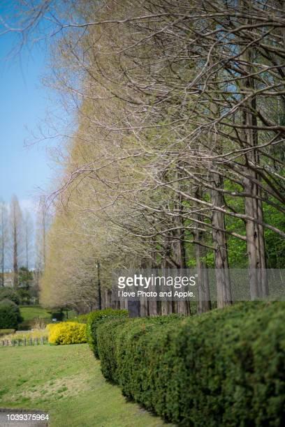 Spring park scenery