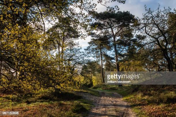 spring path - william mevissen ストックフォトと画像