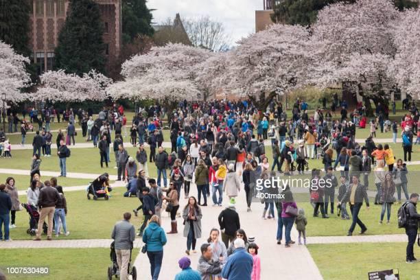 スプリング  - ワシントン大学 ストックフォトと画像