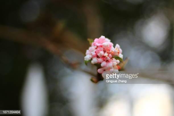 spring - yangzhou foto e immagini stock
