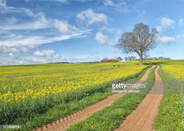 spring - footpath stock pictures, royalty-free photos & images