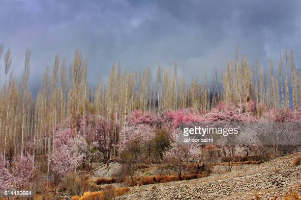 spring - hunza valley stock pictures, royalty-free photos & images
