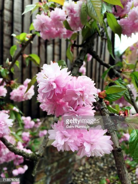 spring - claire plumridge stock pictures, royalty-free photos & images