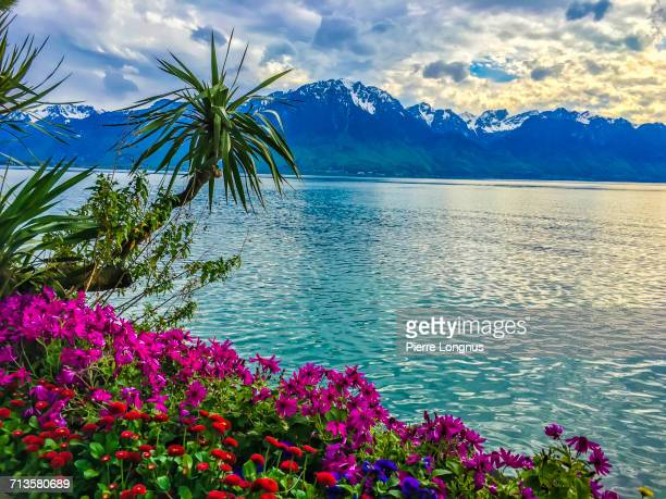 spring - montreux stock pictures, royalty-free photos & images