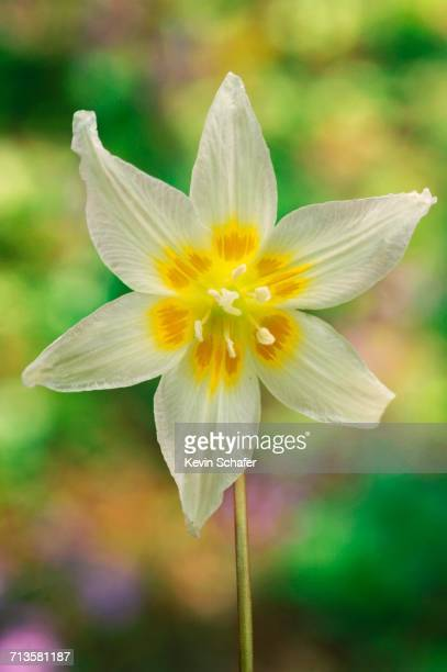 spring - siskiyou stock pictures, royalty-free photos & images