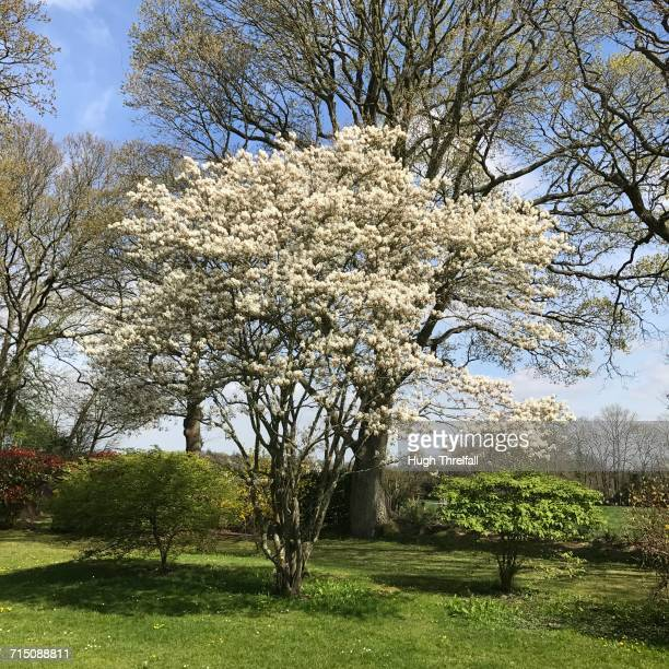 spring - hugh threlfall stock pictures, royalty-free photos & images