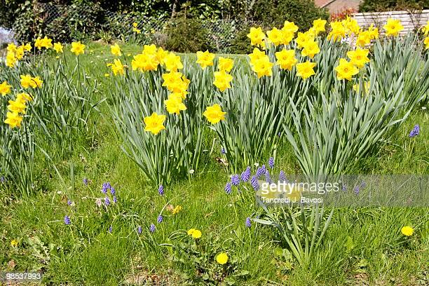 spring - bavosi stock pictures, royalty-free photos & images