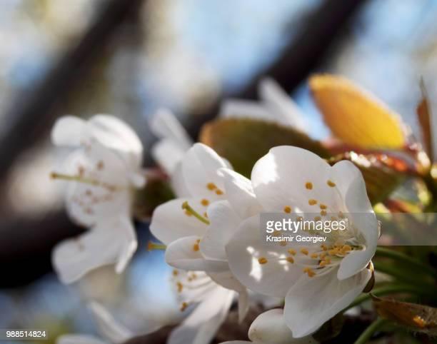 spring - krasimir georgiev stock photos and pictures
