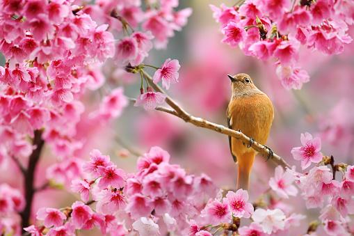 Spring Poetry - gettyimageskorea