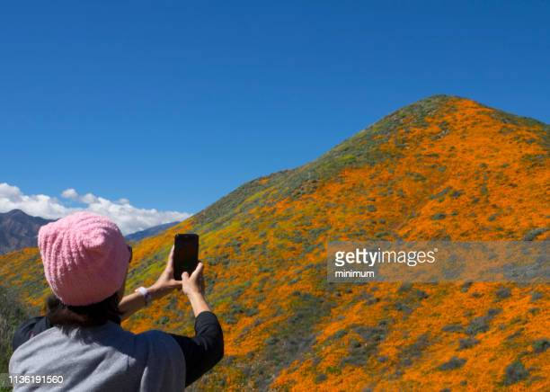 spring poppies bloom - lake elsinore stock photos and pictures