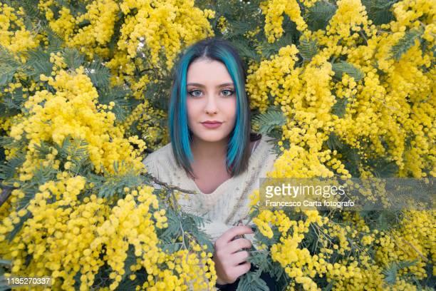 spring portrait - mimosa stockfoto's en -beelden
