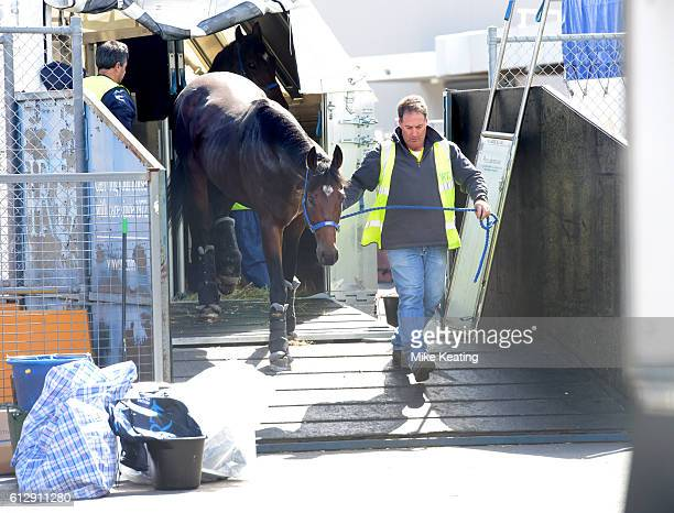 Spring Racing Carnival International Horse Arrivals at Tullamarine Melbourne International Airport on October 01 2016 in Melbourne Australia