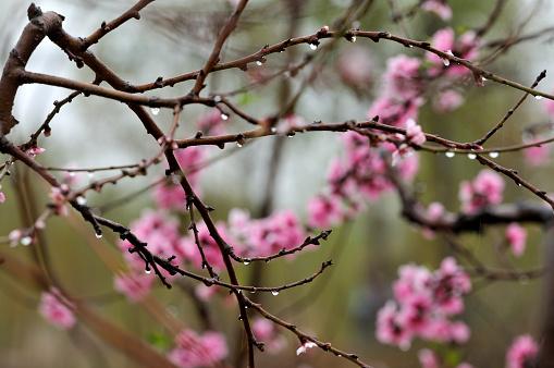 Spring rain 470627710