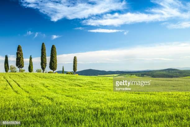 Frühling-Straße zwischen Zypressen in der Toskana - Grün Feld Landschaft