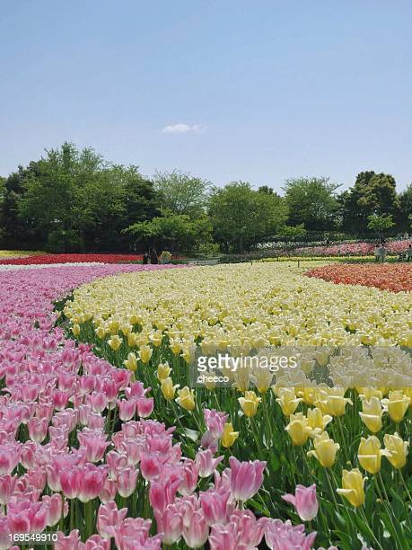 spring road - mie prefecture stock pictures, royalty-free photos & images