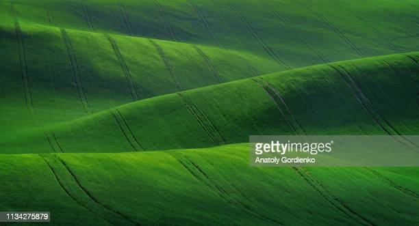 spring rural landscape of agricultural fields of south moravia. green waves of the fields of south moravia, czech republic. landscape of green hills. good texture or background - de rola imagens e fotografias de stock