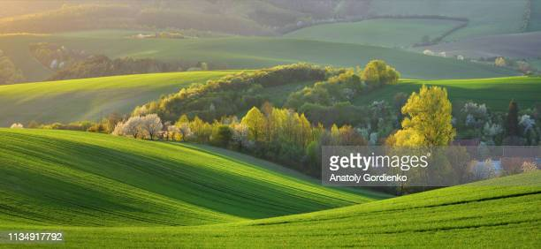 spring rural landscape of nature with blossoming trees on the green wavy hills of south moravia. beautiful sunset on the wavy fields of south moravia, czech republic. - april stock pictures, royalty-free photos & images