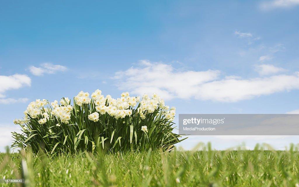 春の風景 : ストックフォト