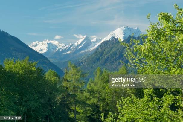 Spring scenery with look at the snowcovered Watzmann Piding Neubichler alp