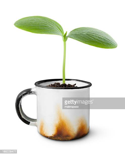 Spring. Seedling into an old cup.