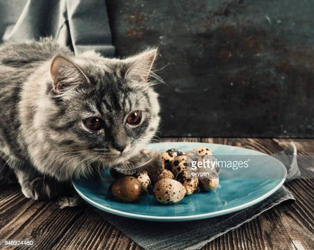 Spring still life with gray sibirian cat