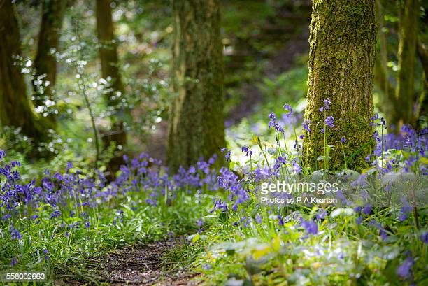 Spring sunlight on a woodland path