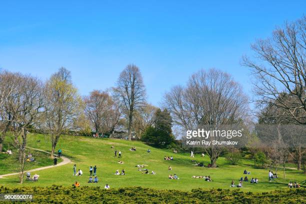 spring sunny day in high park - may stock pictures, royalty-free photos & images