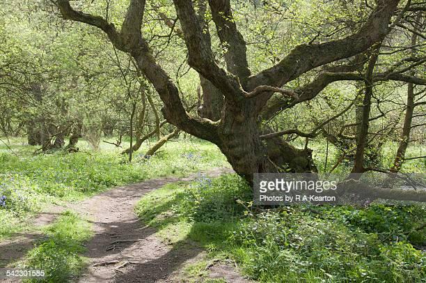 Spring sunshine in an English landscape