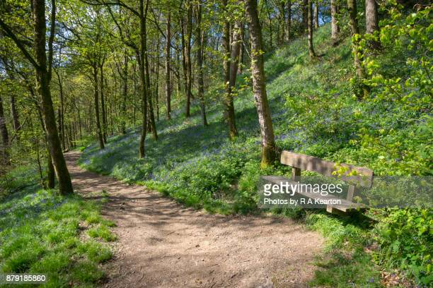 Spring sunshine in an English nature reserve