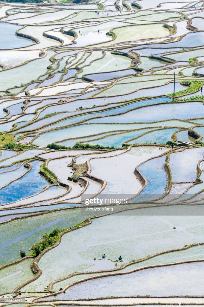 Spring terraces and farmers working in terraced fields : Stock Photo