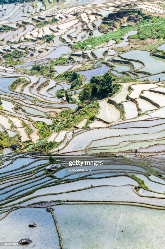 Spring terraces and farmers working in terraced fields : Stock-Foto