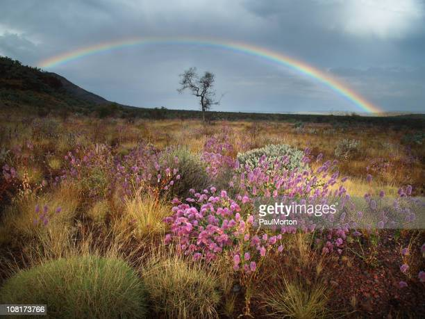 spring thunderstorm in karijini national park - western australia stock pictures, royalty-free photos & images