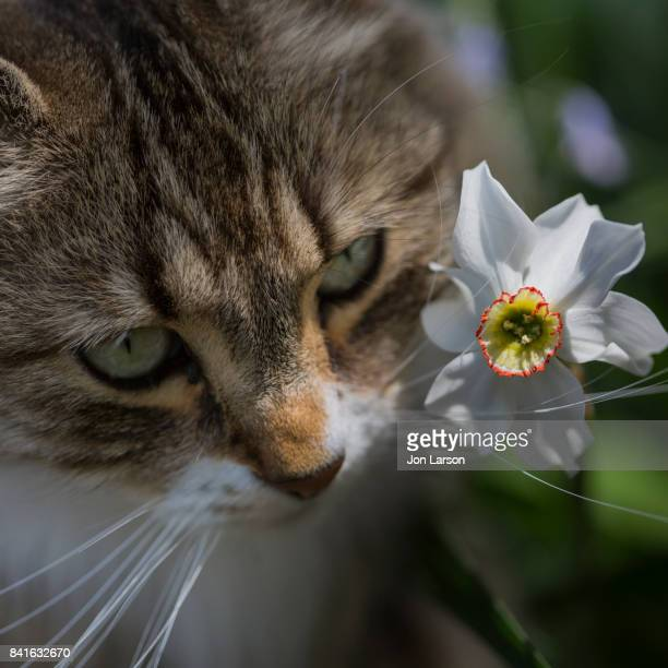 spring time feline - flower part stock pictures, royalty-free photos & images