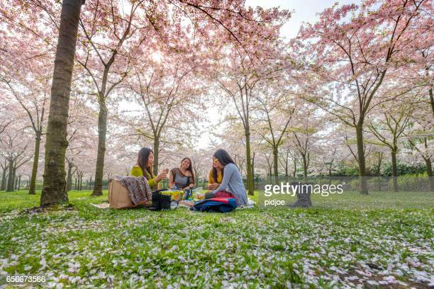 spring time. pink cherry blossoms forest, hanami - hanami stock pictures, royalty-free photos & images