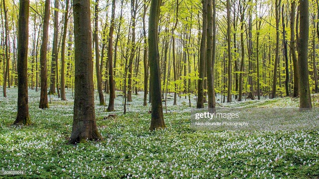 Spring to life : Stock-Foto