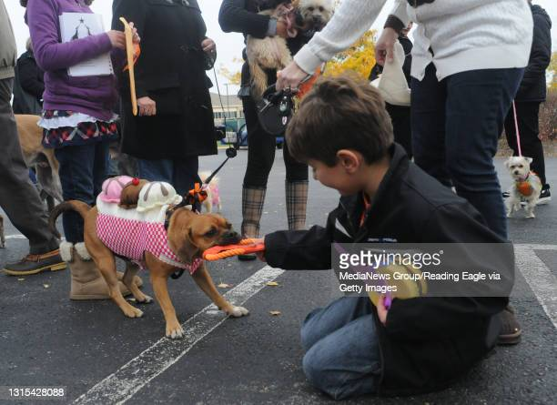 Spring Township, PABuddy, a Puggle, plays with one of his owners Cole Naso both of Wyomissing. Buddy, dressed as an ice cream sundae won best in show...