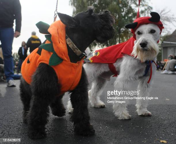 Spring Township, PAFrom left are Shadow and Rosco, miniature schnauzers owned by Rosa Canas of West Reading.During a pet parade and party at the...