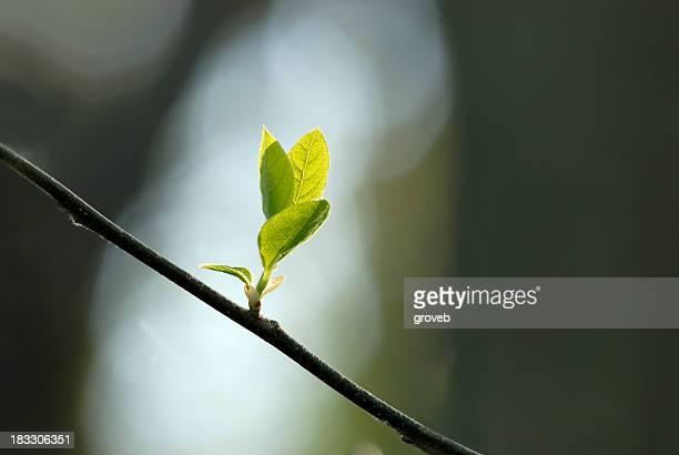 Printemps fleur arbre