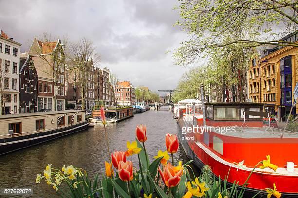 Spring tulip flowers in Amsterdam, Netherlands