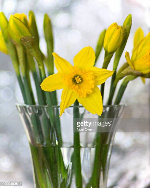 spring vase - nigel owen stock pictures, royalty-free photos & images