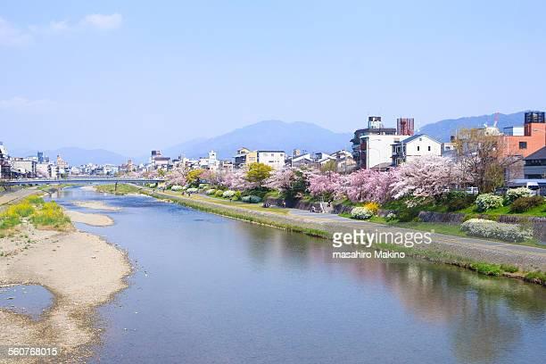spring view of kamo river, kyoto city - fluss kamo stock-fotos und bilder