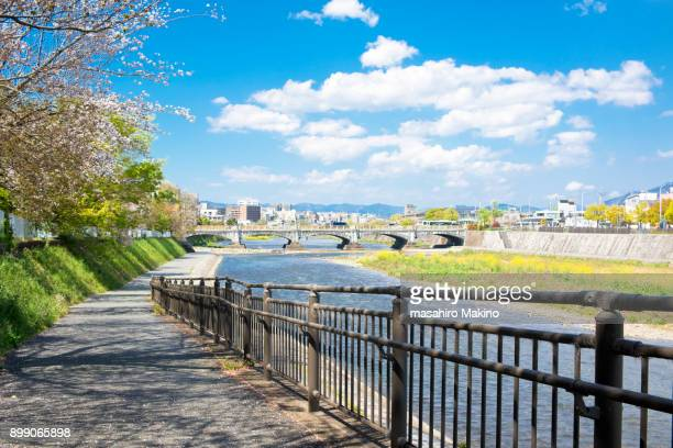 spring view of kamo river, kyoto city - riverbank - fotografias e filmes do acervo