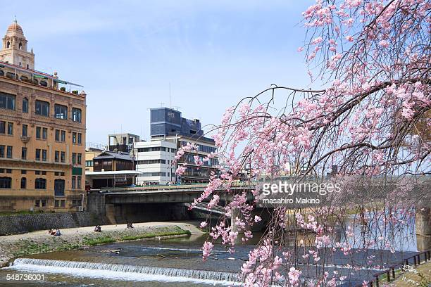 Spring View of Kamo River
