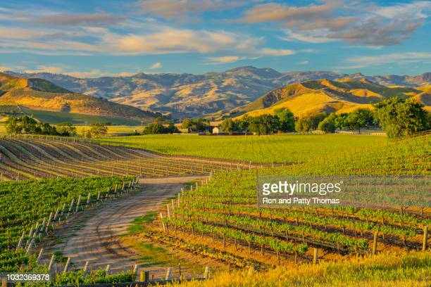 spring vineyard in the santa ynez valley santa barbara, ca - winery stock pictures, royalty-free photos & images